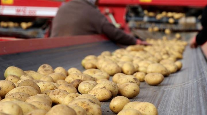 Erdoğan 'her karış toprağı ekin' demişti: Patates depoda çürüme aşamasında!