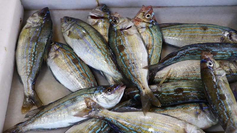 Tezgahlarının yeni gözdesi menekşe balığı